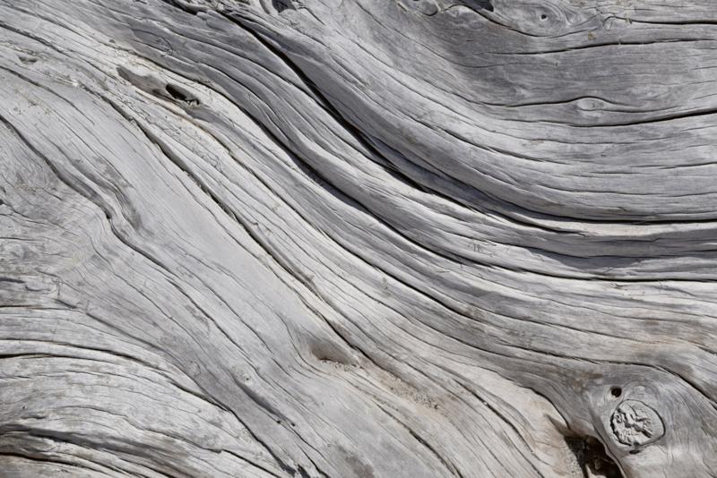 Fotobehang Boom textuur
