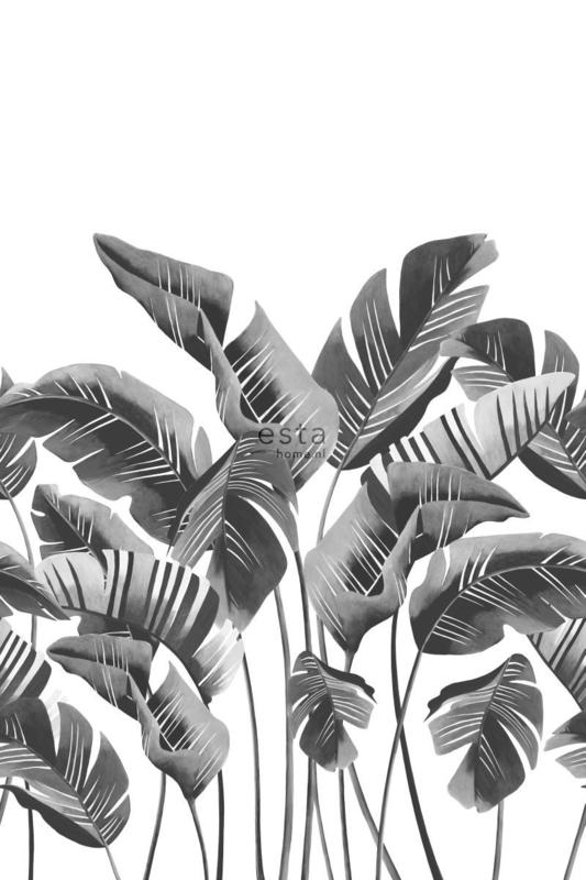 Esta Jungle Fever 158907 Photowall XXL grote bananenbladeren