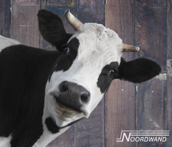 Fotobehang Noordwand Farm life 3750074 Barn cow