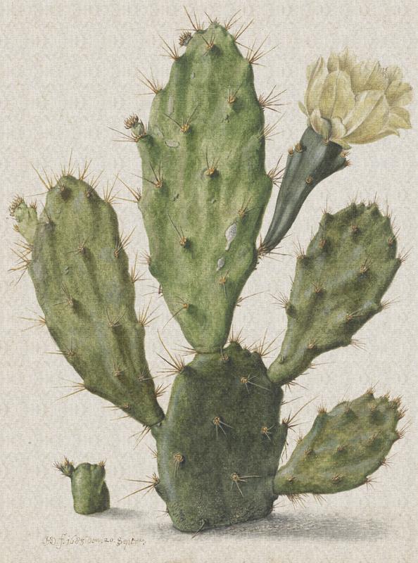 Dutch Painted Memories 8013 Blooming cactus Herman Saftleven