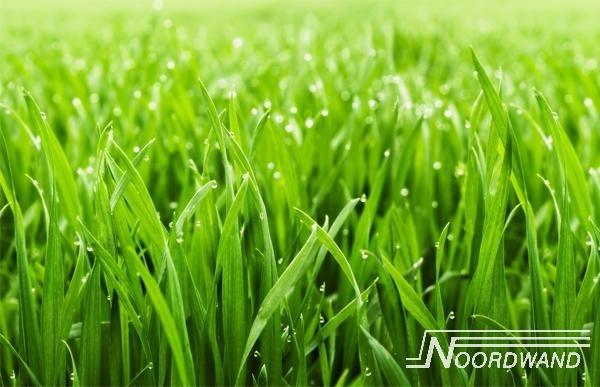 Fotobehang Noordwand Farm life 3750010 Grass