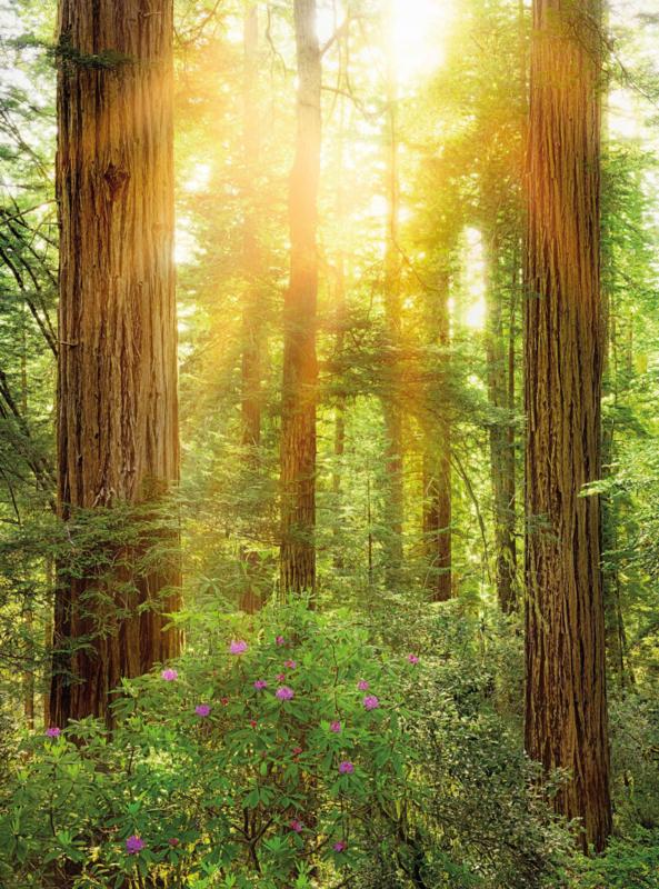 Komar XXL2-044 Redwood