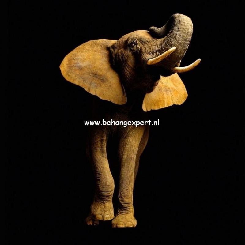 Fotobehang AP Digital 470033 Elephant