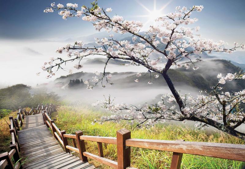 Fotobehang Kersenboom in bloei langs Bergpad
