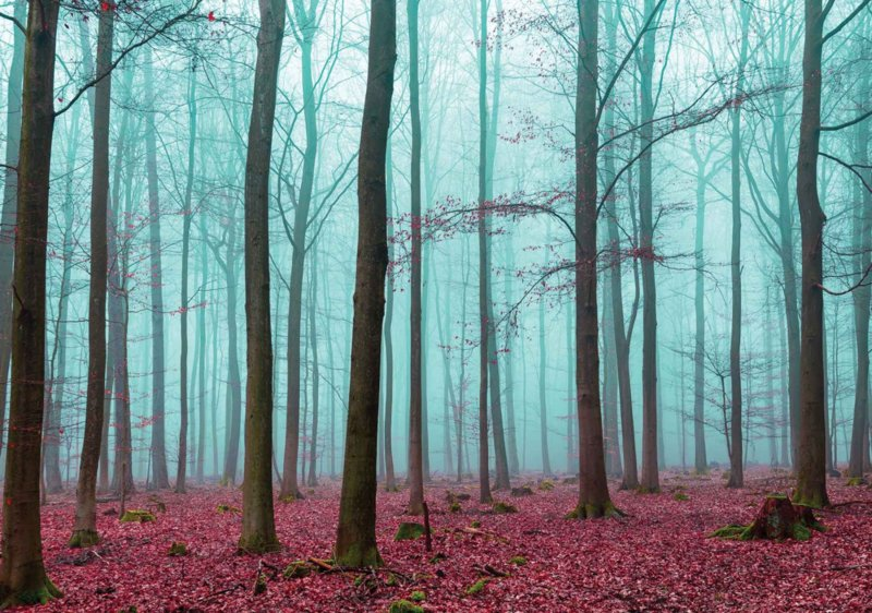 Fotobehang Misty Forest