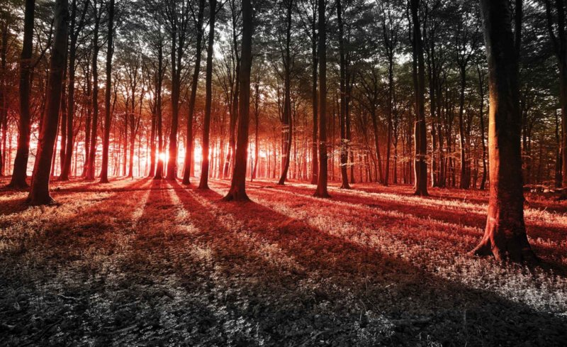 Fotobehang Avondzon in het Bos