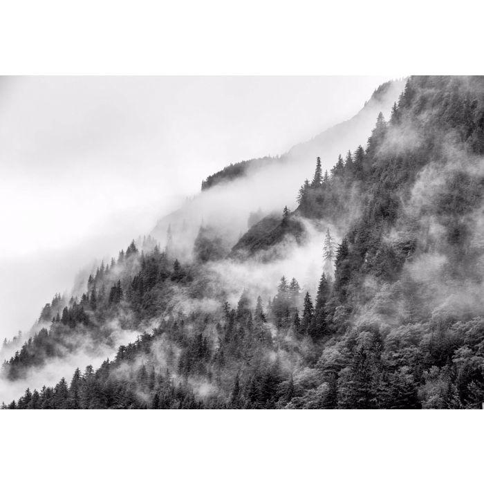 Fotobehang Mist in the Forest Noir