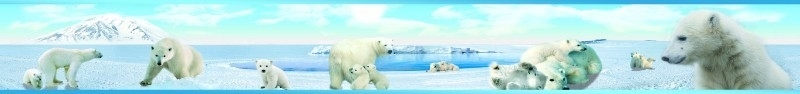 Dutch XXL behangrand Polar Bears 80010