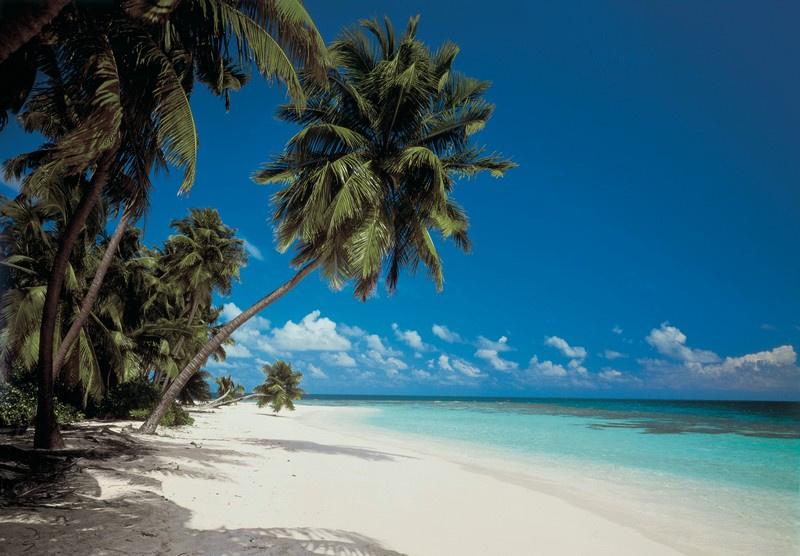 Komar 8-240 Maldives 368cm x 254cm hoog