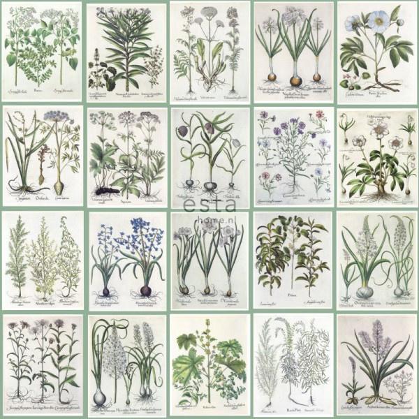 Esta Greenhouse 158826 vlies wallpaper XXL botanical illustrations