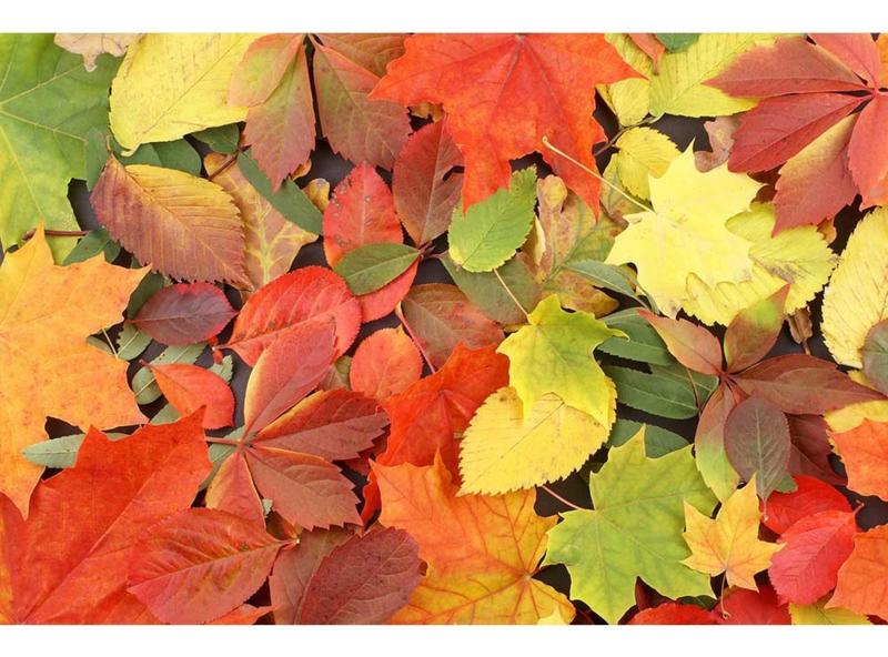 Fotobehang Herfstbladeren