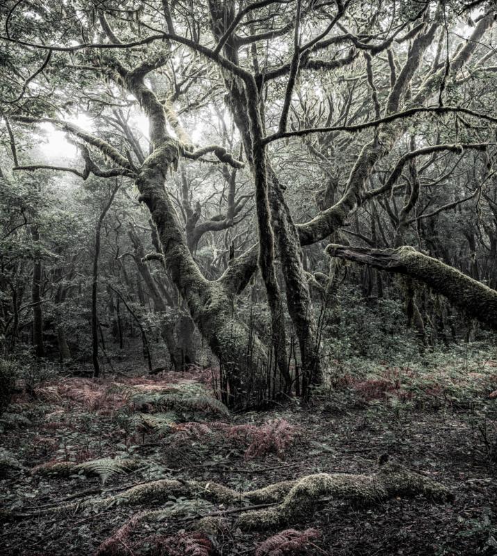 Fotobehang Wanderlust SHX5-018
