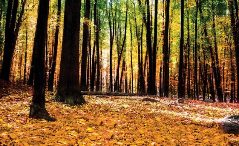 Fotobehang Herfst in Bos