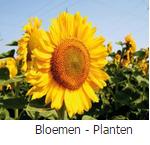 fotobehang met bloemen en planten