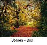 fotobehang bomen en bos
