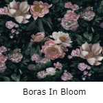 Boras In Bloom