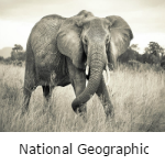 National geographic fotobehang