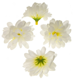 Chrysant wit  5cm