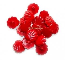 KN561 Rode schelp