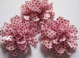 Bloem pink polkadot 5 cm
