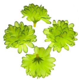 Chrysant groen 5cm