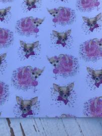 Leer Chihuahua hondjes