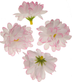 Chrysant wit/neon roze 5cm