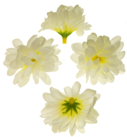 Chrysant vanille 5cm