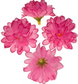 Chrysant 2 tinten roze 5cm