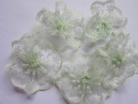 Kanten rozet/bloem mint 4 cm