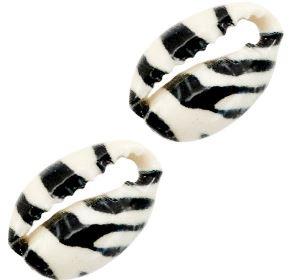 Schelp stukjes Kauri zebra