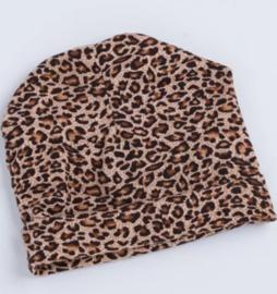 Muts luipaard