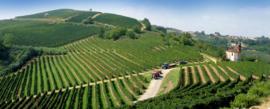 """Malvira- Roero Arneis - WIT- BIO - DOCG, """"Trinita"""" 2016  Piemonte - Italia *****"""