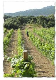 Vermentino di Gallura Superiore 2015, DOCG, Sardegna