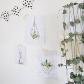 Plantjes van Studio Draak
