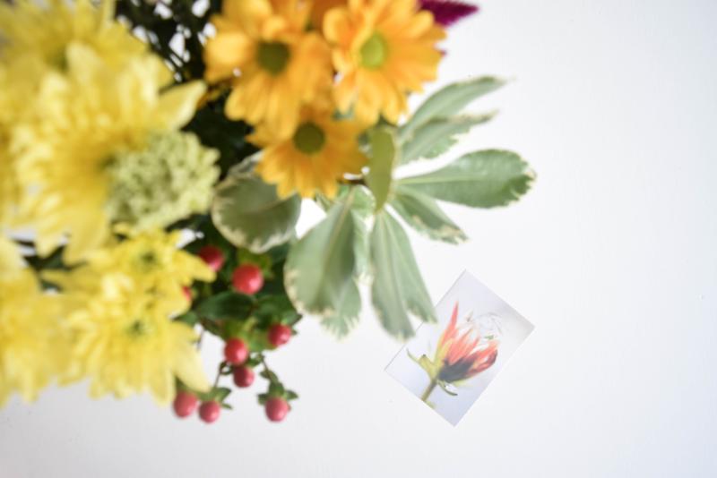 De Verderkijker bloemen