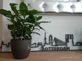 5 stuks Coffee Based Biologisch afbreekbare plantenpot.