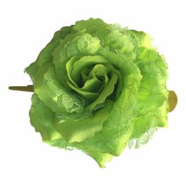 Spaanse (haar) roos, groen met kant