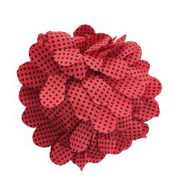 Haarbloem rood met zwarte kleine stippen