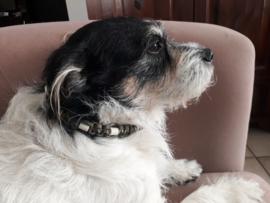 902 Anti-tekenband voor hond 2 stuks