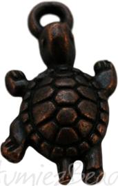 00894 Bedel schildpad Koper 23mmx12mm