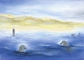 D1011 De zeehonden