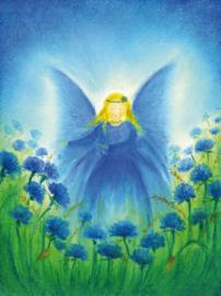 S1006 Het vlindervrouwtje