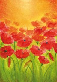 B1007 Poppies