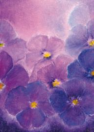 B1006 Violets