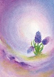 B1009 De hyacint