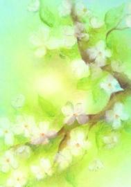 B1015 Blossom