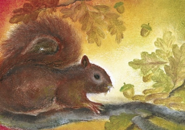 D1005 The squirrel