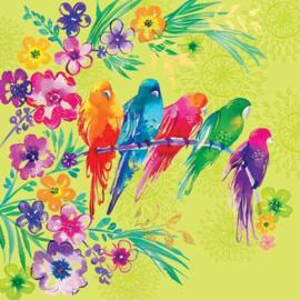 M1855 - Parrots