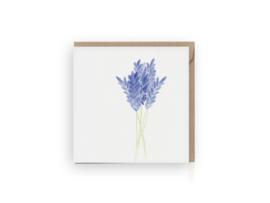 Lavendel wenskaart - Grafiquelien